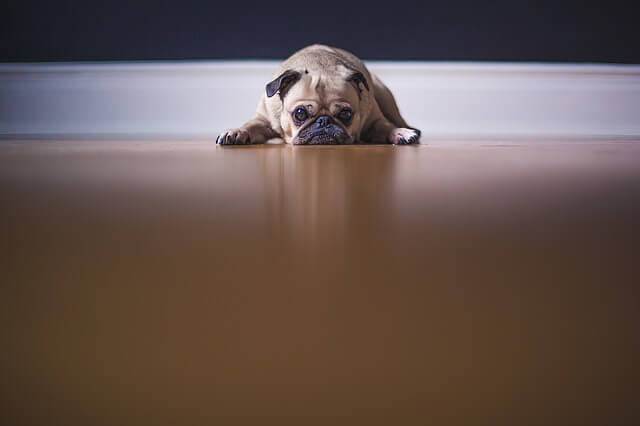 Sad pup: what are developers ashamed of?